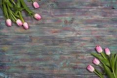 新鲜的桃红色春天郁金香边界  免版税库存图片