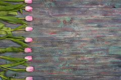 新鲜的桃红色春天郁金香边界  库存图片