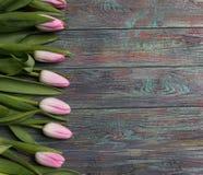 新鲜的桃红色春天郁金香边界  库存照片