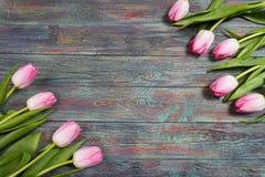 新鲜的桃红色春天郁金香边界  免版税图库摄影