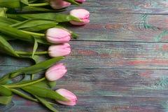 新鲜的桃红色春天郁金香边界  免版税库存照片
