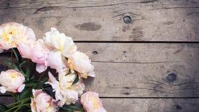 新鲜的桃红色牡丹在年迈的木背景开花 免版税库存照片