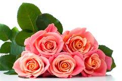 新鲜的桃红色玫瑰 免版税库存照片