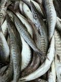 新鲜的梭子鱼鱼在市场上 免版税图库摄影