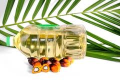 新鲜的棕榈油种子 库存图片