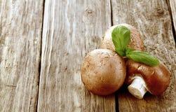 新鲜的棕色伞菌属蘑菇 库存照片