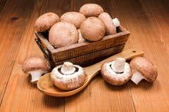 新鲜的棕色蘑菇 图库摄影