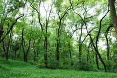 新鲜的森林 库存照片