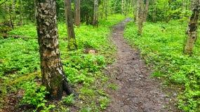 新鲜的森林 库存图片