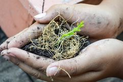 新鲜的植物在手边 库存照片