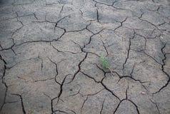 新鲜的植物在沙漠,裂缝 库存图片