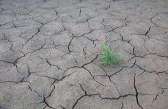 新鲜的植物在沙漠,裂缝 库存照片