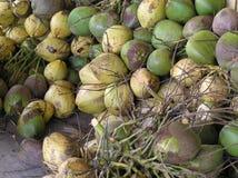 新鲜的椰子,波多黎各 库存照片
