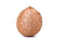 新鲜的椰子 免版税图库摄影