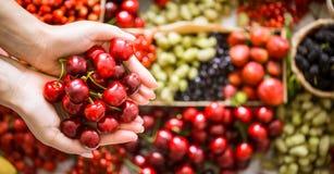 新鲜的樱桃在女孩的手上 免版税图库摄影