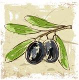 新鲜的橄榄 库存例证