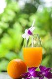 新鲜的橙汁 图库摄影
