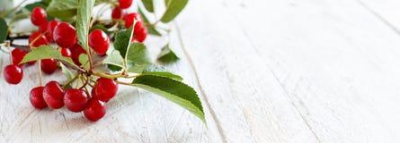 新鲜的欧洲酸樱桃 免版税图库摄影