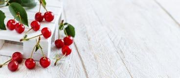 新鲜的欧洲酸樱桃 库存照片