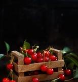 新鲜的欧洲酸樱桃 库存图片
