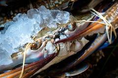 新鲜的死的花螃蟹Portunus armatus,以前P pelagicus 免版税库存照片