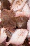 新鲜的比目鱼在鱼市上 免版税库存图片