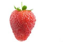 新鲜的水多的草莓 库存照片