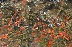 新鲜的河水和五颜六色的底部 库存图片
