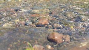 新鲜的河水,山小河的急流 安慰的4K录影,通过水您能看到石头 股票录像