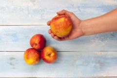 新鲜的油桃在手中和在蓝色木桌上 免版税图库摄影