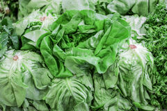 新鲜的法国莴苣沙拉叶子 免版税库存图片