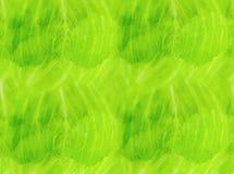新鲜的浅绿色的基本的莴苣叶子透明与静脉生物碱烹饪背景菜单明信片 库存照片