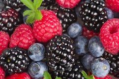 新鲜的浆果的混合 免版税库存图片