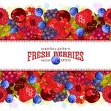 新鲜的浆果 素食新鲜的农产品 库存照片