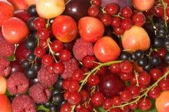 新鲜的浆果 免版税库存照片