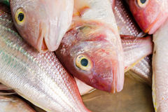 新鲜的海鱼,鱼市 免版税图库摄影