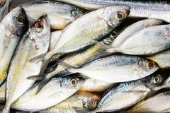 新鲜的海鱼,鱼市 免版税库存图片