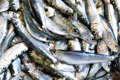 新鲜的海鱼 免版税库存图片