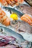 新鲜的海鲜 库存图片