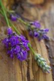 新鲜的淡紫色小树枝  免版税库存图片
