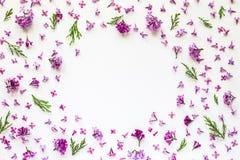 新鲜的淡紫色花和绿色枝杈花卉边界在白色 库存图片