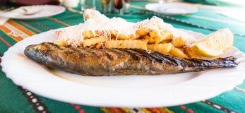 新鲜的烤鳟鱼鱼 免版税库存图片