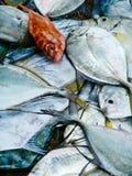 新鲜的热带鱼渔夫抓住  早晨市场在亚洲 库存照片