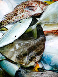 新鲜的热带鱼渔夫抓住  早晨市场在亚洲 库存图片
