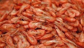 新鲜的煮沸的桃红色小虾紧密  免版税库存图片