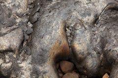 新鲜的熔岩,夏威夷 免版税库存照片