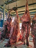 新鲜的牛肉 库存照片