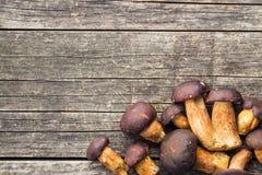 新鲜的牛肝菌蕈类蘑菇 免版税库存图片