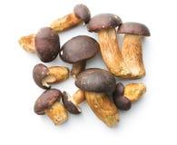 新鲜的牛肝菌蕈类蘑菇 库存照片