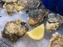 新鲜的牡蛎在冰变冷了 图库摄影